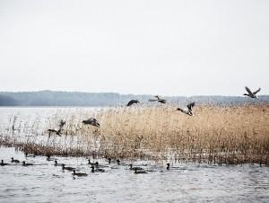 04-2016-joutsen-finland-photo-krista-keltanen-15a