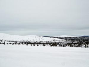 12-2015-joutsen-finland-photo-krista-keltanen-02