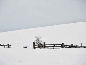 12-2015-joutsen-finland-photo-krista-keltanen-09