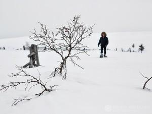 12-2015-joutsen-finland-photo-krista-keltanen-14